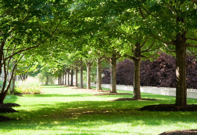 a pleasant row of trees in a quiet park setting on a sunny day
